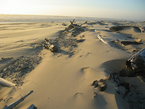 Oregon sand dunes